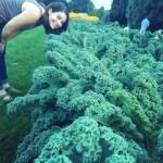 Cheesman Park Kale