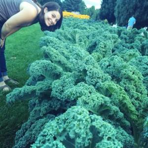 Kale in Cheesman
