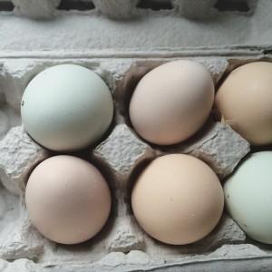 Backyard chicken eggs | uprootfromoregon.com