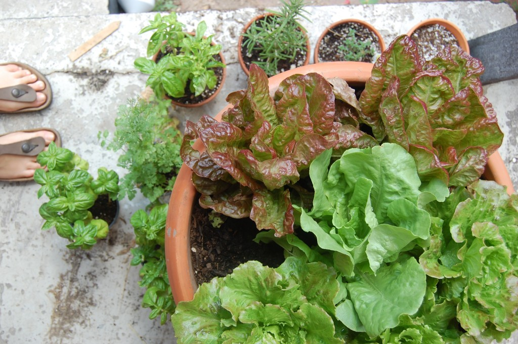 Back Porch Container Gardening with Lettuce and Herbs