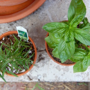 Herb planters on the patio, a simple container gardening idea | uprootkitchen.com