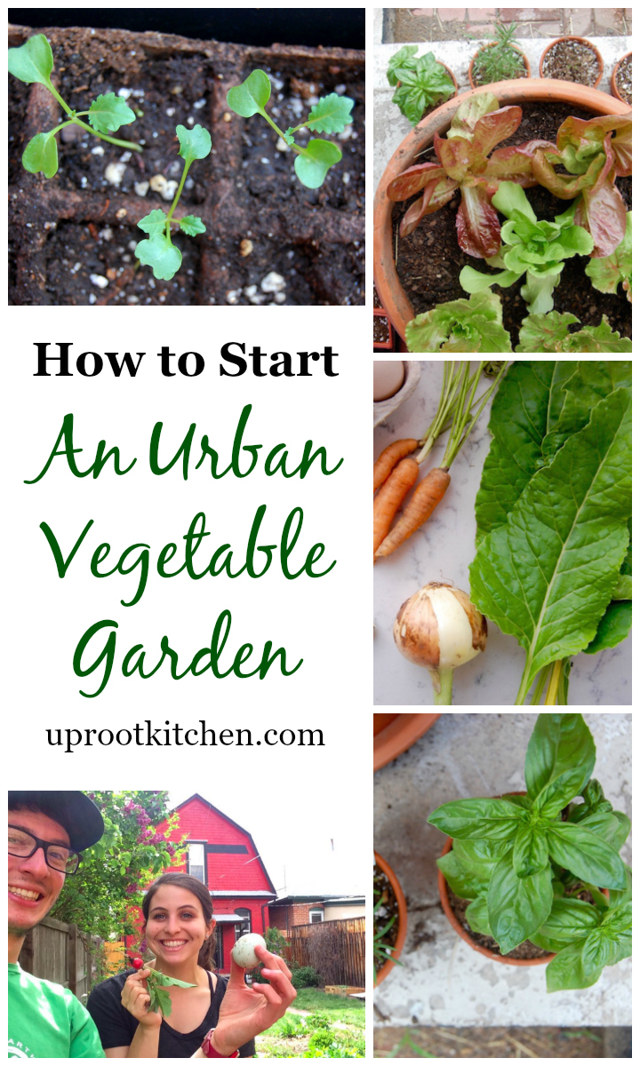 How To Start An Urban Vegetable Garden